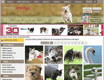 66c1bd0c3dd55ec3a192a0ebffcd15c6f1cc0573.jpg?uri=photos-animaux