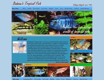 A7e90df4cc2be63e05938f6912c20e4495cd497b.jpg?uri=badmanstropicalfish