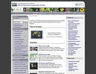 E9384a66db01697b0042aadcc44c9fdb53980169.jpg?uri=plants.usda